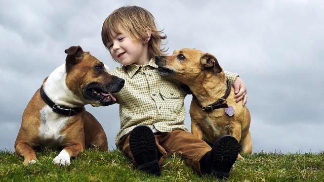 Мальчик с щенками на траве
