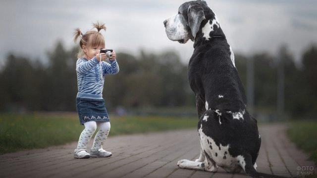 Маленькая девочка фотографирует огромного пса