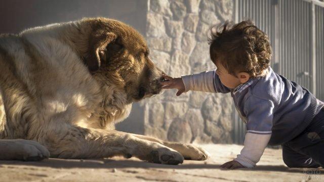 Маленький мальчик с большой мохнатой собакой