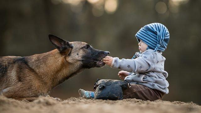 Малыш кормит собаку