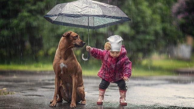 Малышка с собакой под зонтом