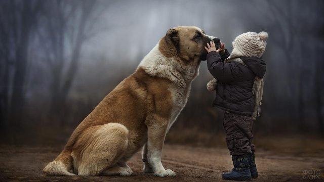 Ребёнок с собакой гуляет осенним днём