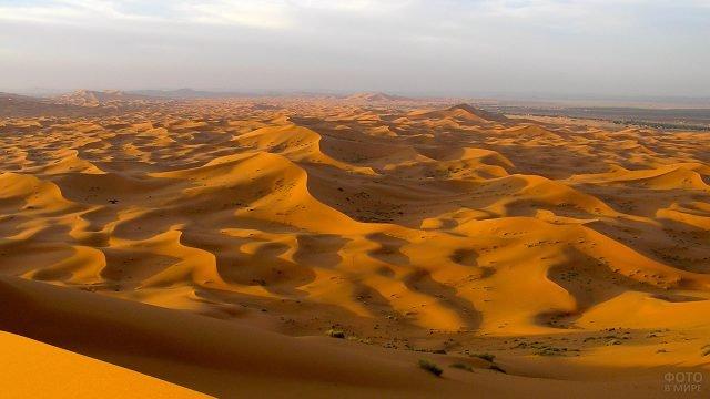 Барханы пустыни Сахара в лучах вечернего солнца