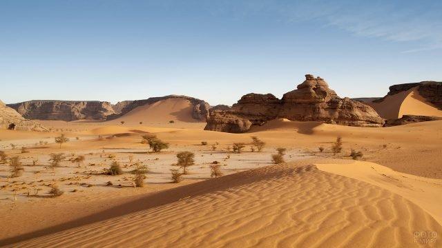 Дюны и небольшие деревца на фоне скал пустыни Сахара