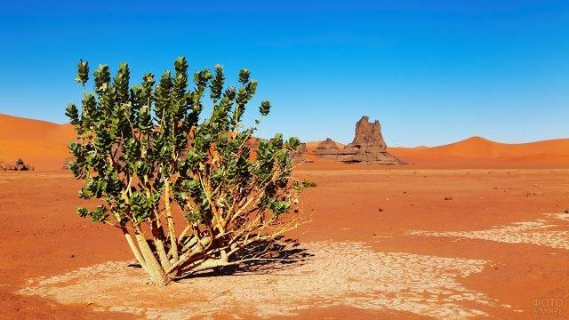 Одинокое зелёное деревце в пустыне