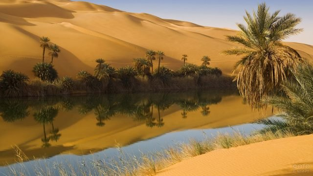 Пальмы и вода посреди пустыни Сахара
