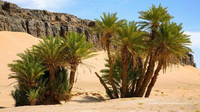 Природный ландшафт с пальмами и скалами пустыни Сахара в Марокко