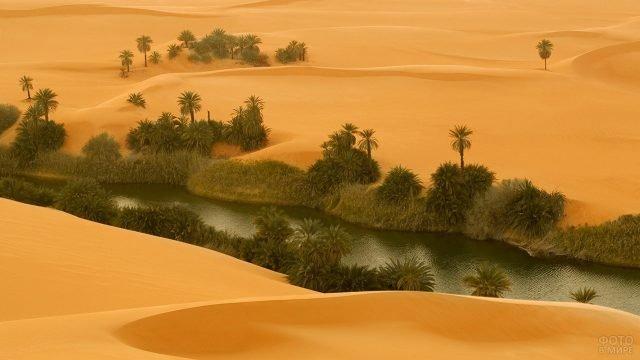 Вид сверху на зелень оазиса среди жёлтого песка Сахары