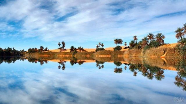 Зеркальное отражение пальм в воде озера посреди оазиса в Сахаре