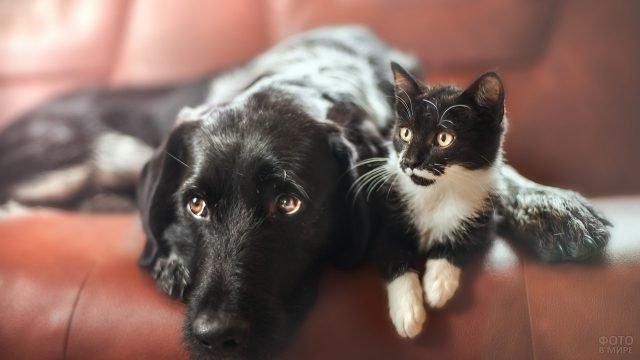 Чёрная собака с чёрно-белым котёнком лежат на диване