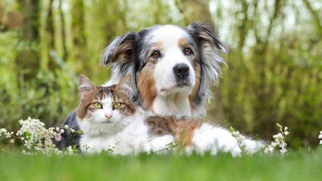 Кот и собака на траве
