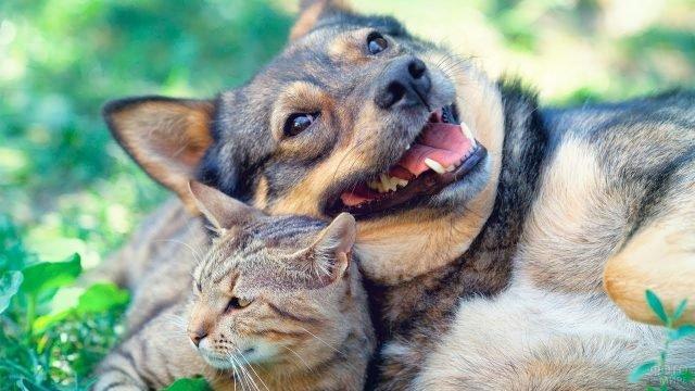 Кот с довольной собакой