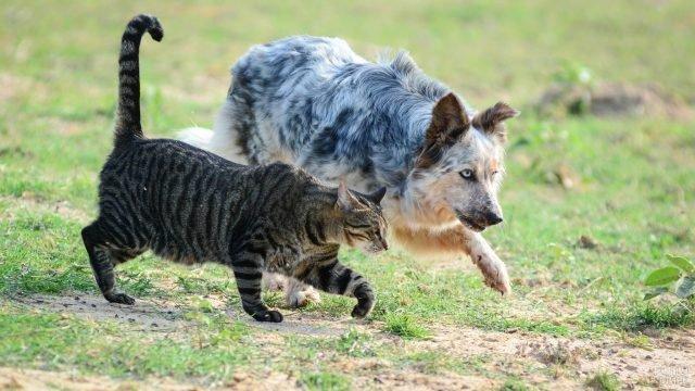 Кот с собакой бегут на улице