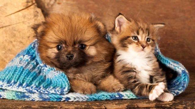 Котёнок с щенком лежат в шарфе
