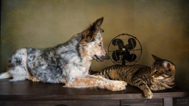 Пёс и кот лежат на столе