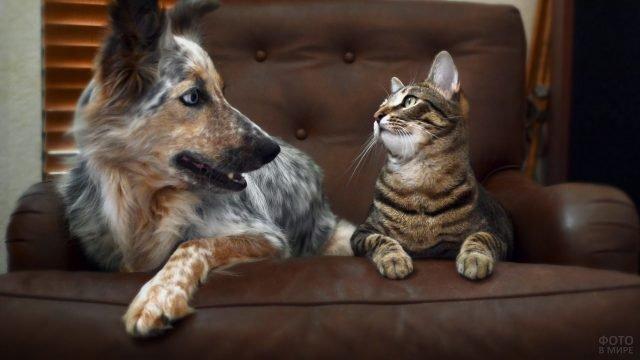 Пёс с полосатым котом лежат на кресле