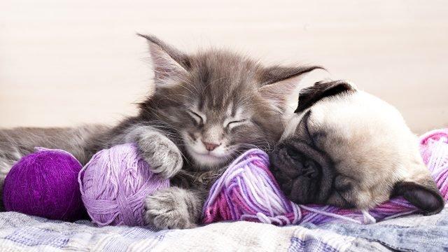 Серый котёнок и Мопс уснули в клубках ниток