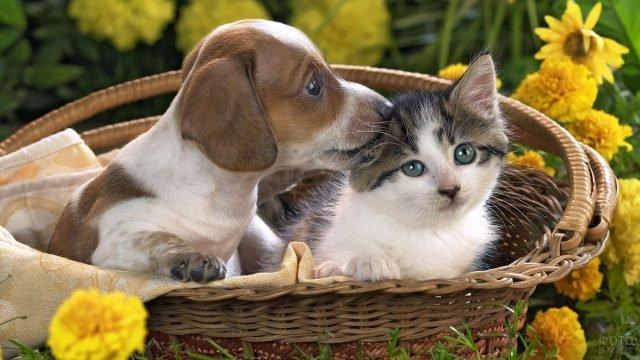 Щенок с котёнком в корзинке