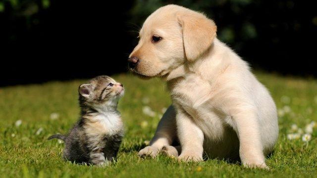 Щенок с котёнком сидят на траве