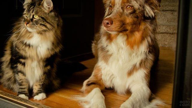 Собака и Сибирский кот смотрящие вдаль