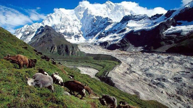 Стадо на склоне зелёного холма в Тибете