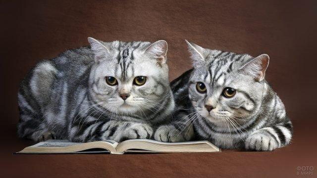 Британские кошки читают книгу