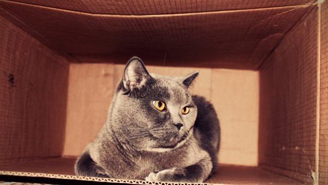 Кошка прячется в коробке