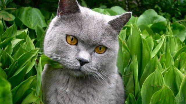 Котик сидит в ландышах