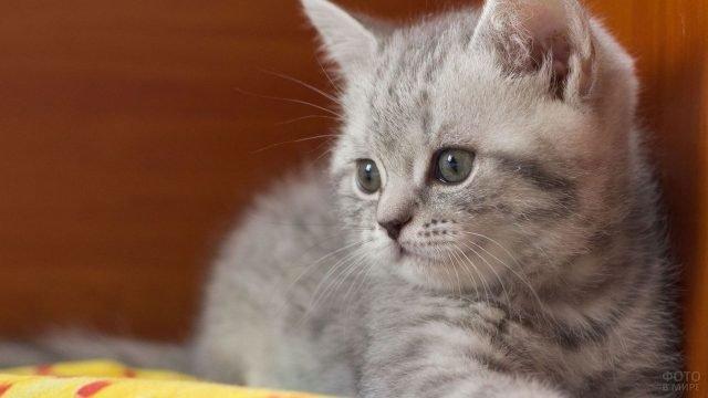 Маленький котёнок задумчиво смотрит