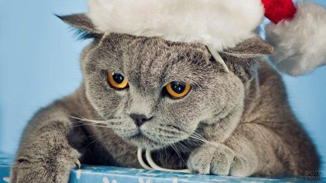 Недовольный кот в новогоднем колпаке