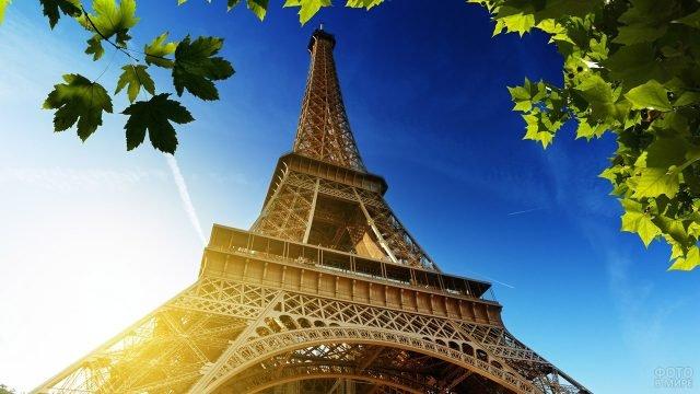 Кленовые листья на фоне Эйфелевой башни