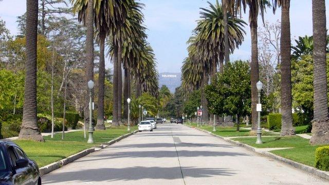 Пальмовая аллея на Бульваре Виндзор в Голливуде
