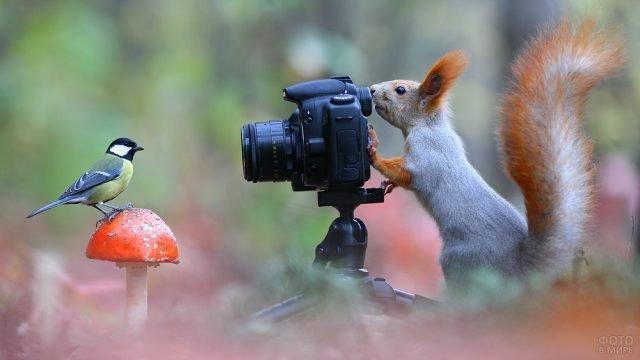 Бека фотографирует синичку, сидящую на мухоморе