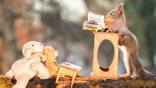 Белка читает книжку плюшевым игрушкам