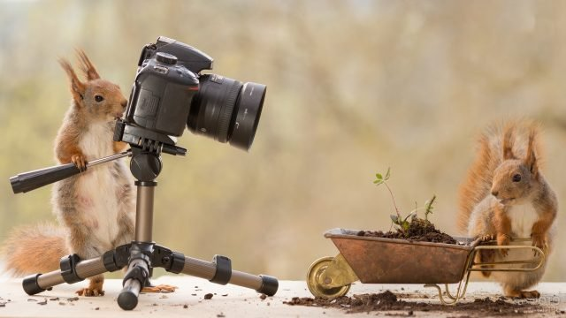 Белка фотографирует другую белку с тележкой