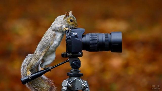 Белка изучает фотоаппарат, забравшись на ручку треноги