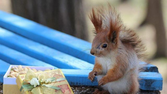 Белка с коробкой ореховых подарков