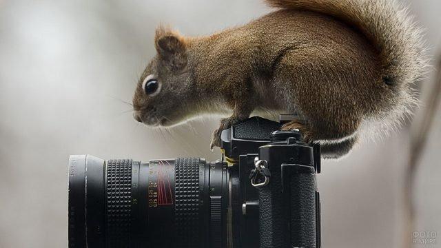 Белка сидит на фотоаппарате