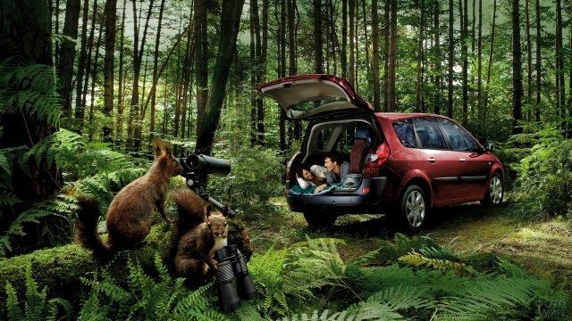 Белки наблюдают за туристами в лесу