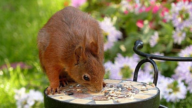 Белочка есть семечки и орешки