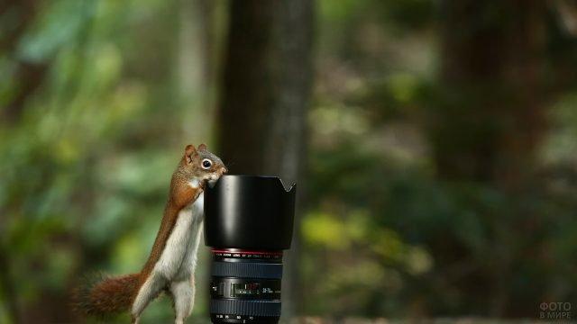 Любопытная белка и объектив фотоаппарата