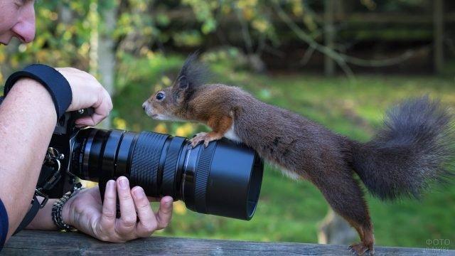 Любопытная белка опасливо залазит на фотоаппарат