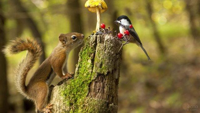 Любопытный бельчонок взбирается к птице с ягодами
