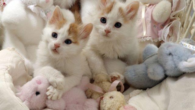Котята породы Турецкий ван сидят в мягких игрушках