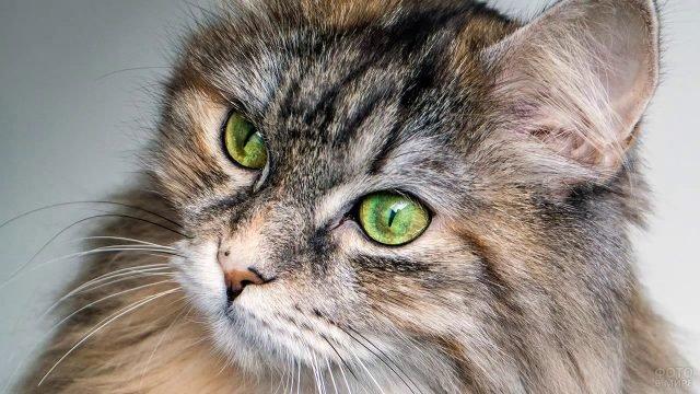 Молодая кошечка с зелёными глазами