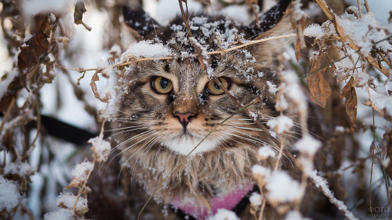 Сибирская красавица зимой выглядывает из-под листвы