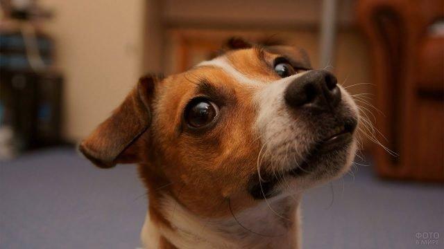 Милая мордашка собаки смотрит в камеру