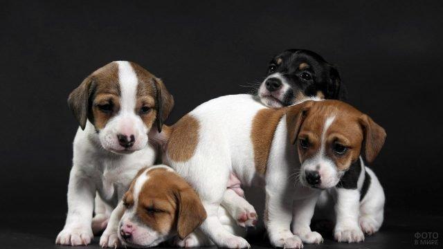 Милые щенки думают о чём то своём