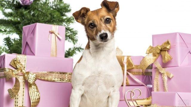 Собачка позирует на фоне подарков и ёлки