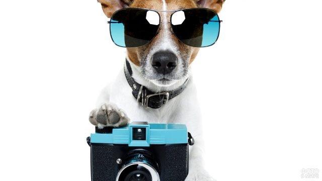 Собачка в очках позирует на камеру